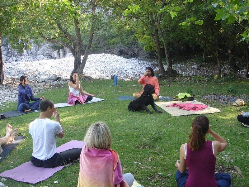 What is the difference between professional and basic yoga training
